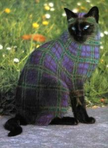 Plaid paintcat08